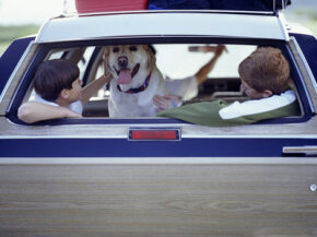 A solar-powered vehicle ventilator would keep this merry trio cool inside a hot car on a summer day.