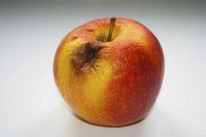 A patient with diabetic ketoacidosis emits an smell that's been likened to rotting apples.