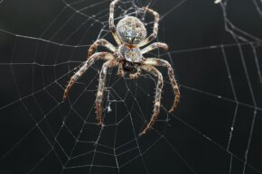 Orb webs may be the best known type, but spiders are a lot more creative than we give them credit for.