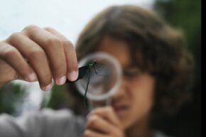 Person looking at a bug through a magnifying glass