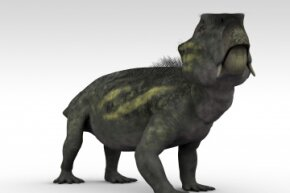 The small, stocky Lystrosaurus managed to survive a completely inhospitable environment by heading underground.