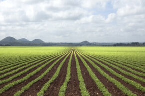 Sustainable agriculture helps crops help themselves grow. See more green science pictures.