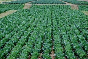 The only real difference between sustainable and conventional farming lies in the methods used to grow crops.