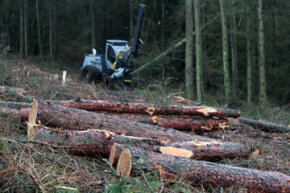 Sustainable forestry encourages balance between economic considerations and the long-term health of woodland areas. See more green science pictures.