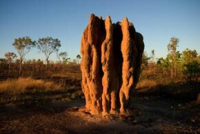 Giant termite mounds mark the