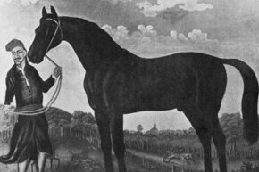 A circa 1690 painting of the foundation sire the Byerly Turk, shortly after he was captured and kept by Robert Byerley.