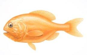 Orange Roughy: It's 149-year lifespan puts it at risk.