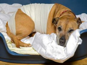 Hope for the best, but prepare for the worst with a pet first aid kit.