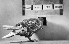 While pigeons aren't warlike, they've been at the center of many wars.