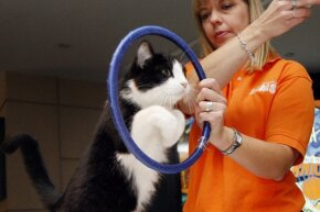 You might be surprised at how quickly a cat figures out that jumping through a hoop will get her a treat.