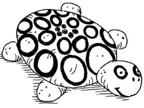 Create a unique design for your new turtle friend.