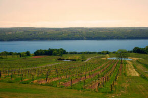 The Finger Lakes region of New York is home to dozens of wineries, many of which are known for their rieslings and ice wines.
