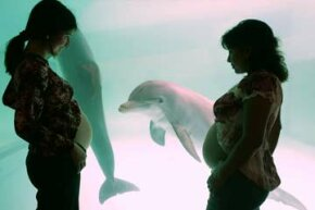 How's this for ultrasonic mind control? Two pregnant women display their stomachs to a female dolphin during a class in Lima, Peru, based on the idea that a dolphin's ultrasonic calls can positively stimulate a baby's brain inside the womb.