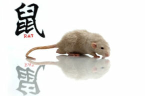 Eek -- it's a rat! Don't worry: In the Chinese zodiac, the rat is imaginative, charismatic, shrewd and witty.