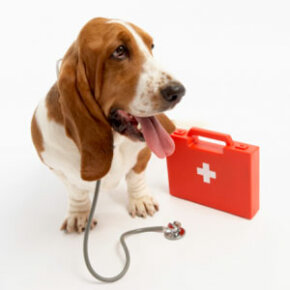Your dog needs a first-aid kit, too.