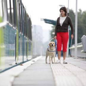 Service animals, like the seeing eye dog shown here, are welcome on nearly all modes of public transportation. See more pet pictures.