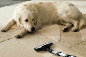 When deciding which vacuum cleaner will work best for you, consider the types of pets and flooring in your home.
