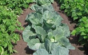 Want to learn more? Check out these vegetable garden pictures.