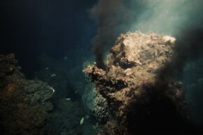 Tubeworms thrive on the chemicals and bacteria around vents on the ocean floor.