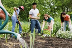 Don't want to garden alone? Try community gardening.