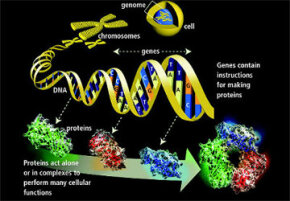 Here's a quick, visual breakdown showing how the proteins fit in with our genetic makeup.