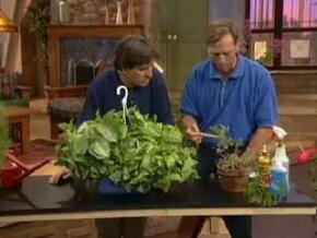 "Get expert advice on how to maintain and take care of indoor plants on Discovery Channel's ""Gimme Shelter."""
