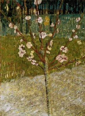 Vincent van Gogh's Almond Tree in Blossom is an oil on canvas (19x14 inches) that is housed in the Van Gogh Museum in Amsterdam.