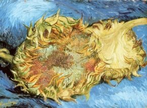Vincent van Gogh's Two Cut Sunflowers is an  (17 x 24 inches) that is housed in  in New York. See more pictures of van Gogh's paintings.