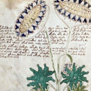 Will we ever unravel the true meaning of the Voynich manuscript? Do we really want to?