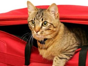 Don't want to leave your pet at home over vacation? Take it with you. Check out these pet pictures.