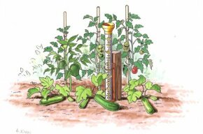 Measuring precipitation in your vegetable garden helps you determine whether your plants need more water.