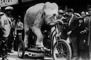 An elephant rides a custom-made tricycle in 1918.