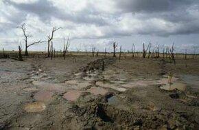 A drought-stricken wetland in Sri Lanka, with elephant tracks through the mud.