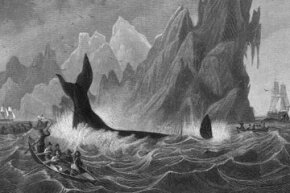 Early whalers used spears to take down whales, as represented in this 1820 engraving. See more pictures of marine mammals.