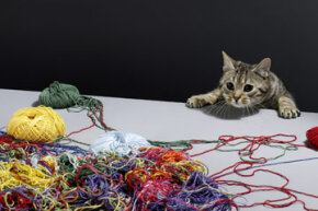 The feline version of string theory is slightly less complex.