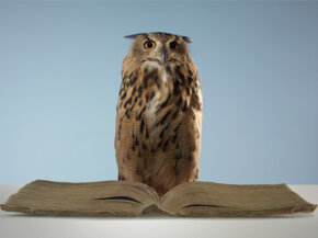 The owl, the wise old scholar of the animal world. See more healthy aging pictures.