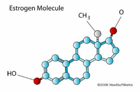 Estrogen is believed to be the primary explanation for why women have more migraines than men.