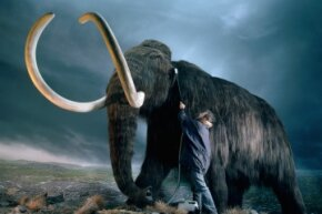 Even though it's a replica (from the Royal British Columbia Museum), you can get a sense of how big the woolly mammoth was compared to humans.