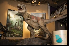 In this picture, it's easy to see how small paleontologists think the T. rex's arms were in proportion to the rest of its body.