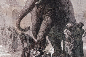 This elephant execution in India seems like a really, really bad way to go.