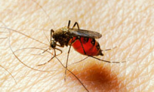 Top 5 Ways To Repel Insects Howstuffworks