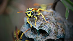 Wasps Have an Image Problem, But Here's Why We Need Them