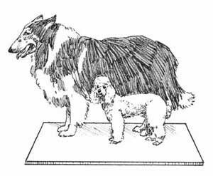 Choose the dog that's the right size for your home space. Check out these dog pictures.