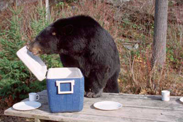 It probably goes without saying, but you don't want to invite a bear to lunch if you can help it.