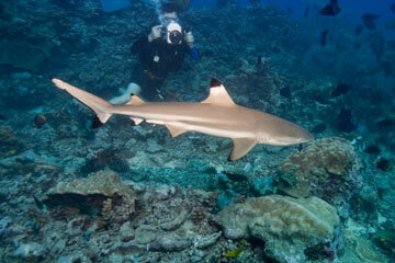 Open-water diving allows you to get up close and personal with different species of sharks.