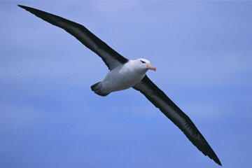 Death often conjures thoughts of superstition, but why are the deaths of albatrosses especially distressing?