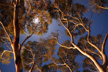 Camping high in a tree gives you a lovely view of the night sky.