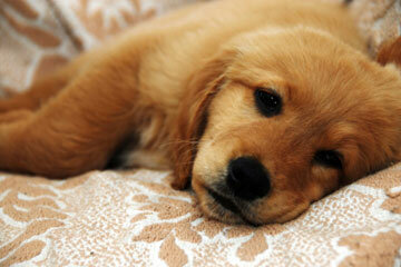 Having a sick dog is no fun, but these tips can help get him on the fast track to recovery.