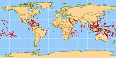 Coral reefs, indicated by red dots, are found predominantly in tropical waters 30 degrees north and south of the equator.