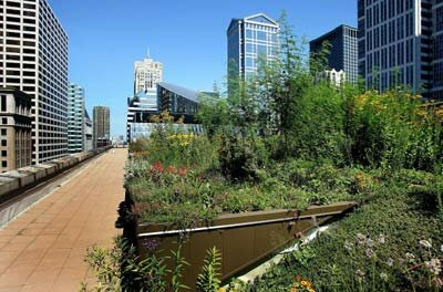 Green roofs, like this one atop Chicago's City Hall, help offset the urban heat island effect.